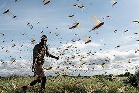 מדינת מבורה, קניה, צילום: גטי אימג'ס
