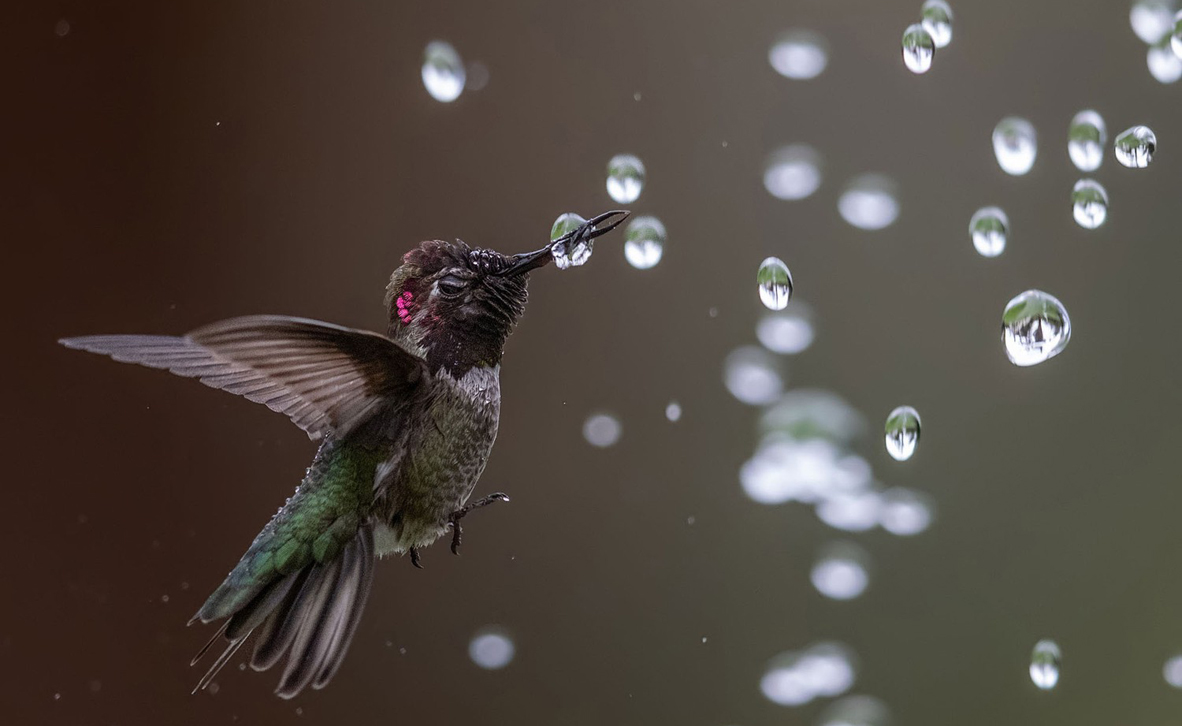 צילום: Bibek Ghosh / 2020 Audubon Photography Awards