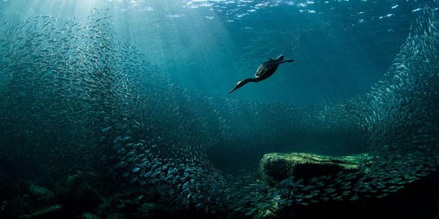 באוויר, בים וביבשה: תמונות זוכות מתחרות צילומי ציפורים