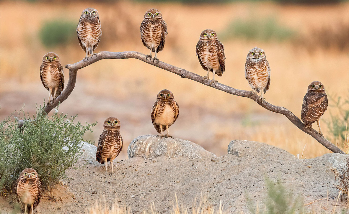 צילום: Andrew Lee / 2020 Audubon Photography Awards
