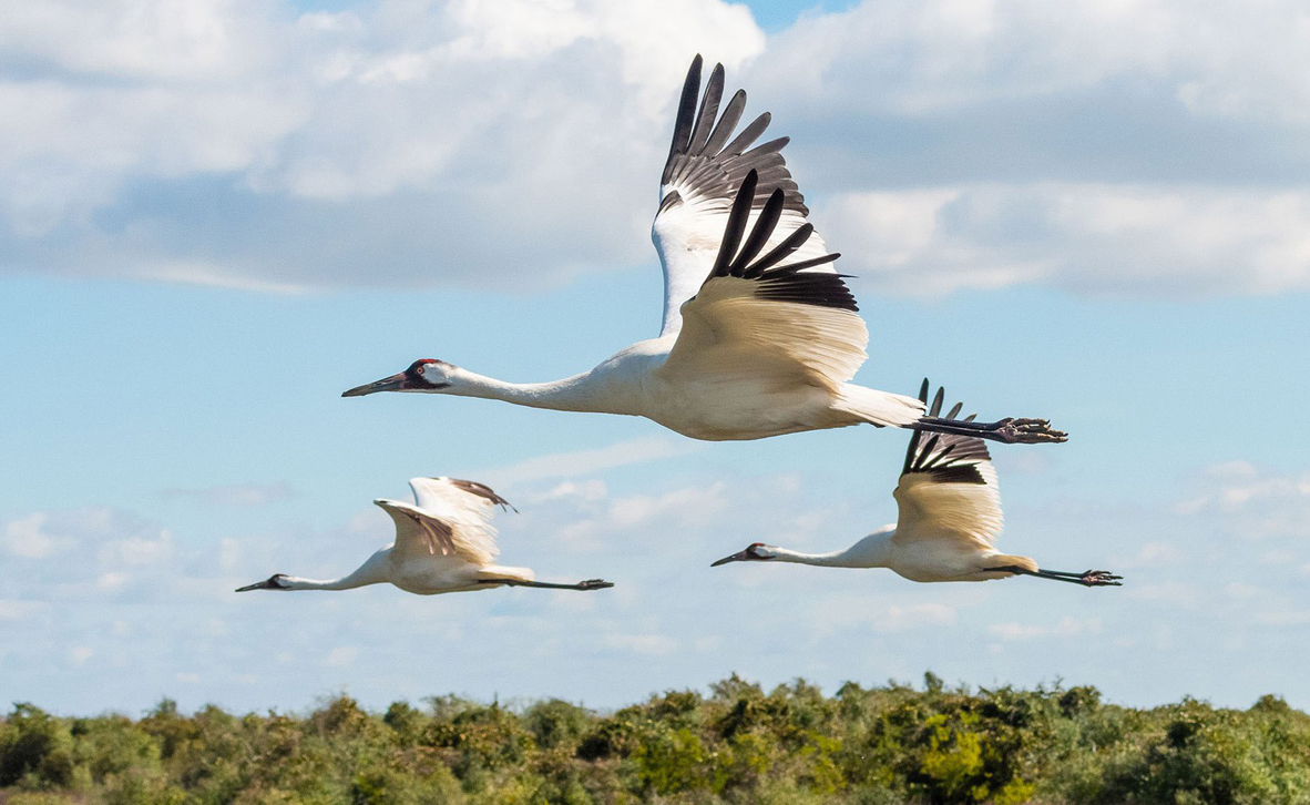 צילום: Heather Roskelley / 2020 Audubon Photography Awards