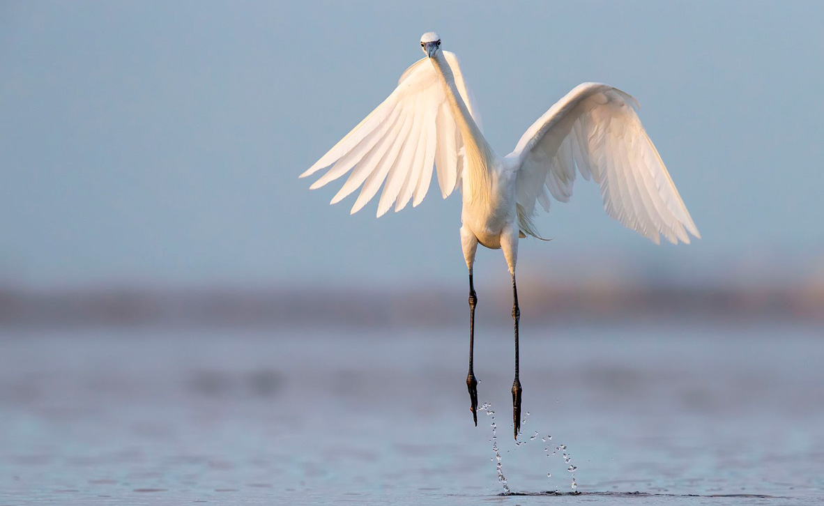 צילום: Tim Timmis / 2020 Audubon Photography Awards