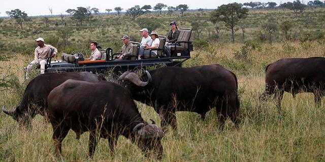 תהיה תיירות? אפריקה בונה על ספארי וירטואלי