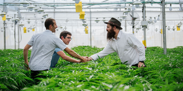 Israel cannabiz leader Seach plans to expand into Europe