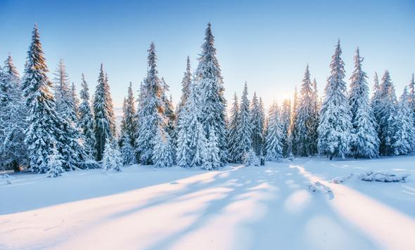 יער מושלג? יש לך סיכוי, צילום: שאטרסטוק
