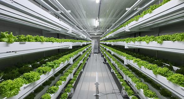 גידול חקלאי ורטיקלי של חברת Smart Acres מדרום קוריאה. אבו דאבי