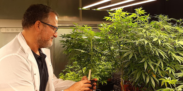 CanBreed secures patent for editing medical cannabis seeds