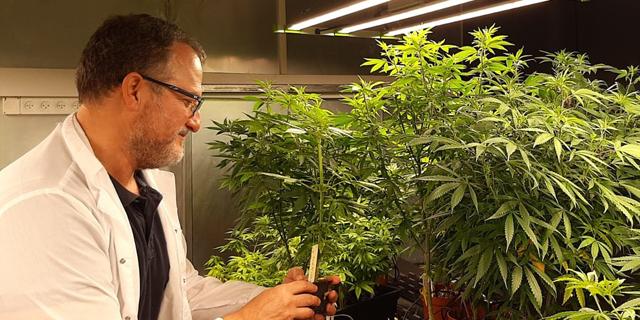 CRISPR-patented cannabis company CanBreed purchases California hemp farm