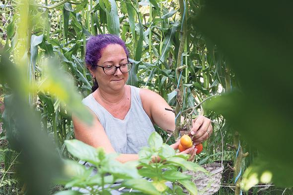 בילי הראל בגינת הירק שלה בחצר הבית