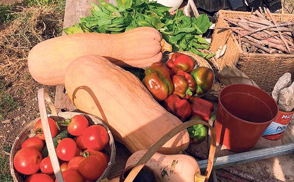 דלעות עגבניות פלפלים שגדלים בגינתה של בילי הראל