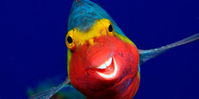 פוטו תחרות תמונות מצחיקות של חיות 2020 דג מחייךפוטו תחרות תמונות מצחיקות של חיות 2020 דג מחייך, צילום: Arthur Telle