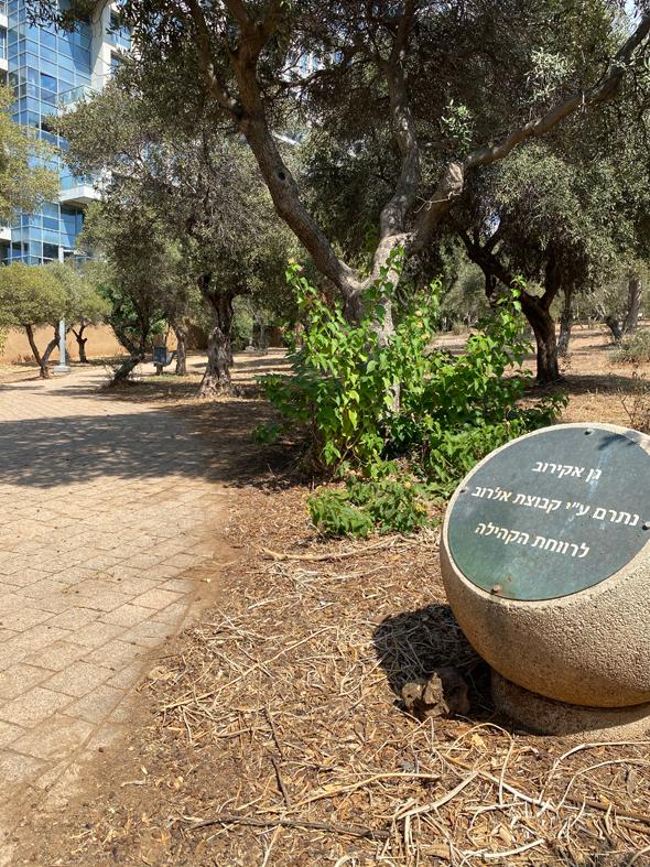"""הגינה הסמלית משהו """"שנתרמה"""" לציבור, צילום: דור זומר"""