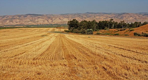 שטח חקלאי בבקעת הירדן