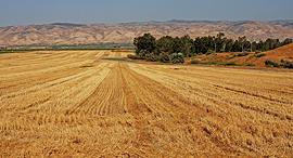 שטח חקלאי בבקעת הירדן, צילום: נמרוד גליקמן
