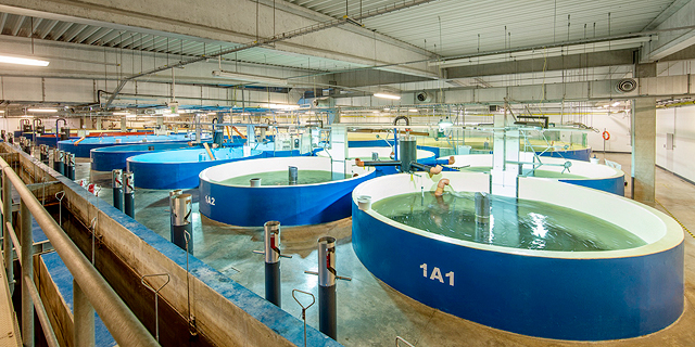 Israel's AquaMaof signs $90 million deal to bring its indoor fish growing tech to Nevada
