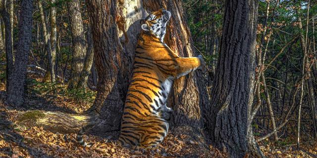 יופי טבעי: תמונות זוכות בתחרות צילומי חיות בר