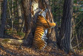 , צילום: Sergey Gorshkov / Wildlife Photographer of the Year