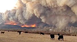 השריפה בקולורדו, צילום: רויטרס