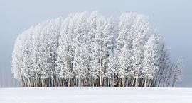 פוטו תחרות צילומי מזג אוויר 2020 עצים בערפל, צילום: Preston Stoll