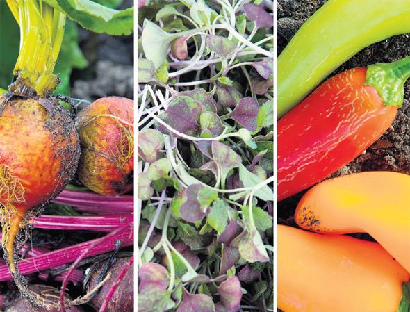 ירקות של עלה הביתה, צילום: תומי הרפז,