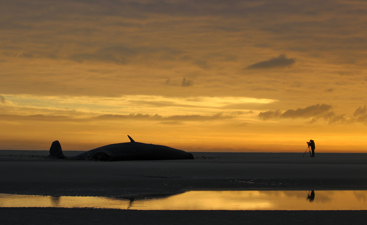 צילום: inaugural Ocean Photography Awards / Jeroen Hoekendijk