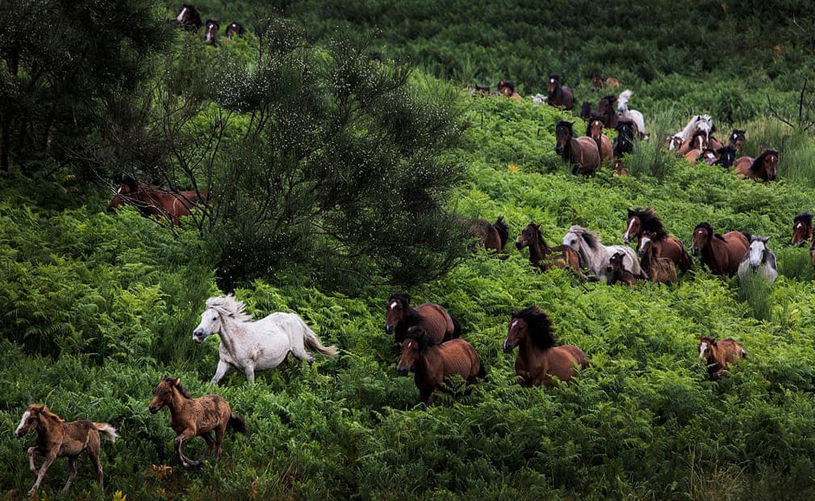צילום: Javier Arcenillas/ European Environment Agency
