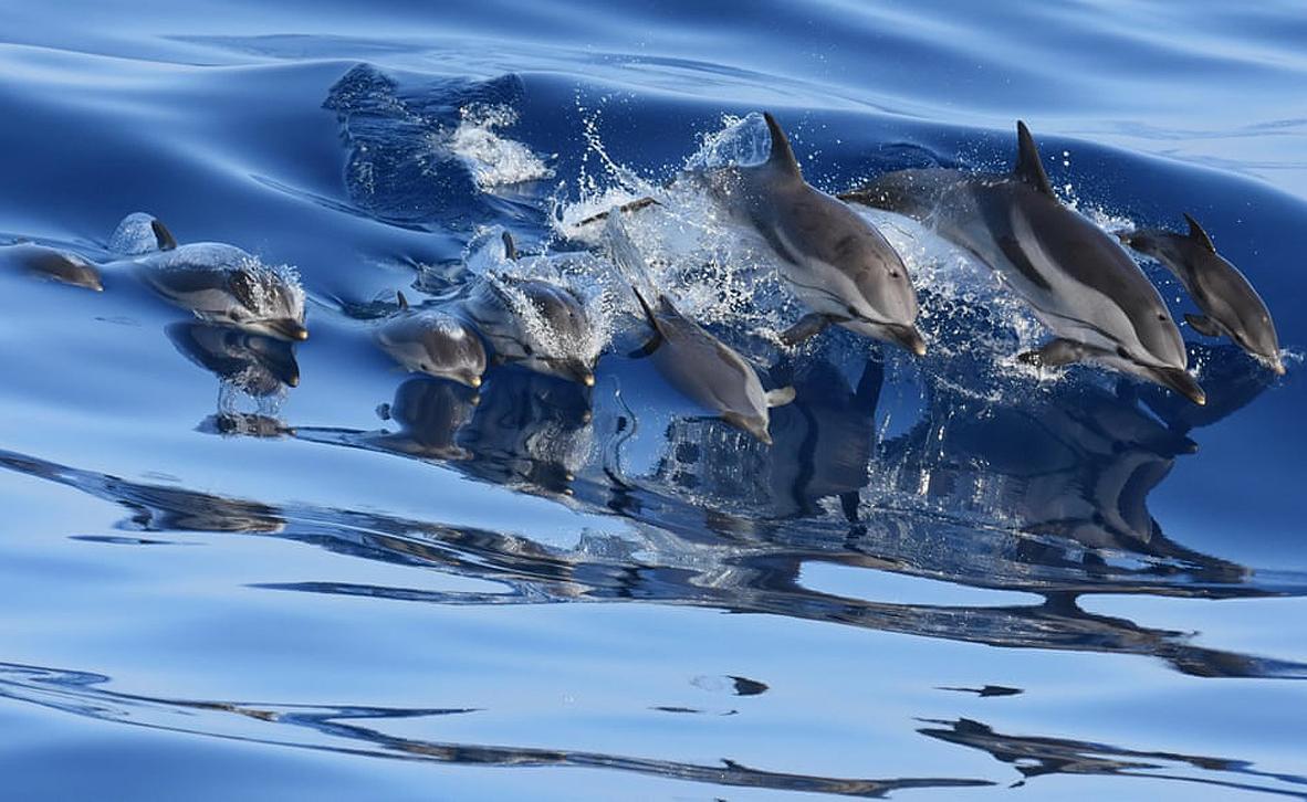 צילום: Gabriella Motta/ European Environment Agency