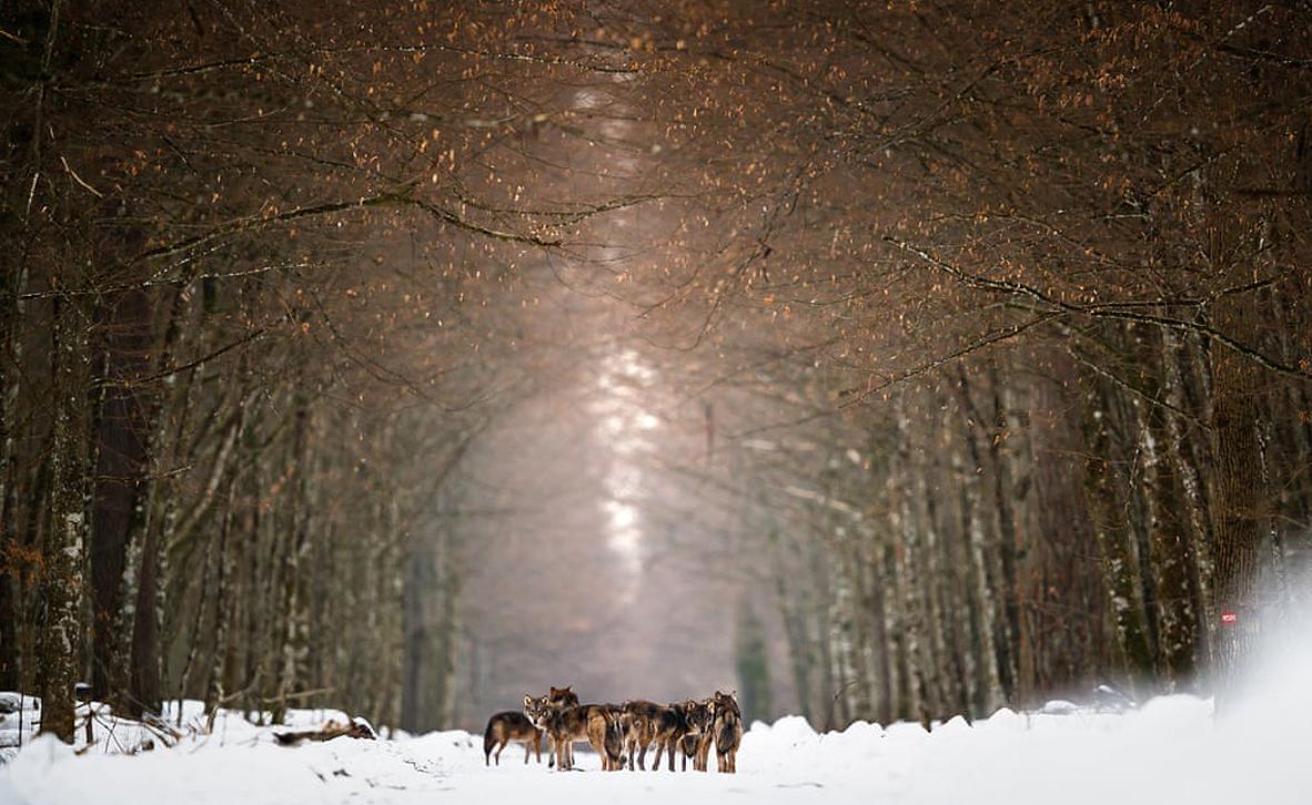 צילום: Mateusz Piesiak/ European Environment Agency