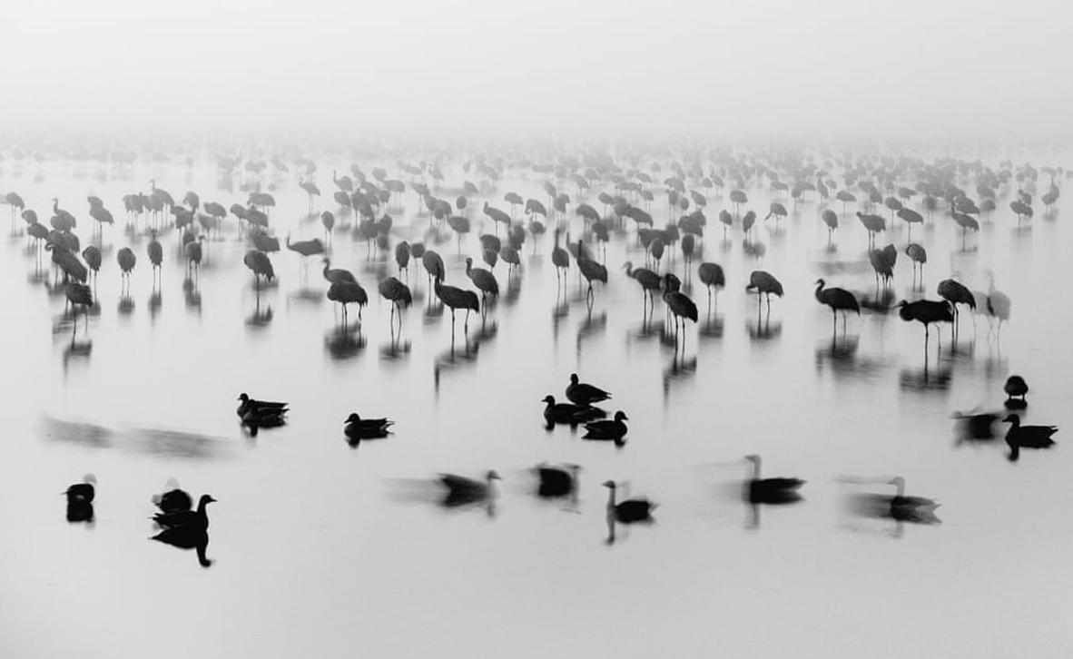 צילום: Bence Mate/ European Environment Agency