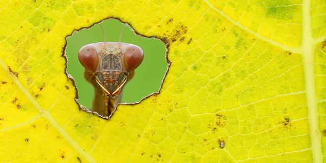 לגלות מחדש את הטבע: תמונות מנצחות מתחרות צילומים