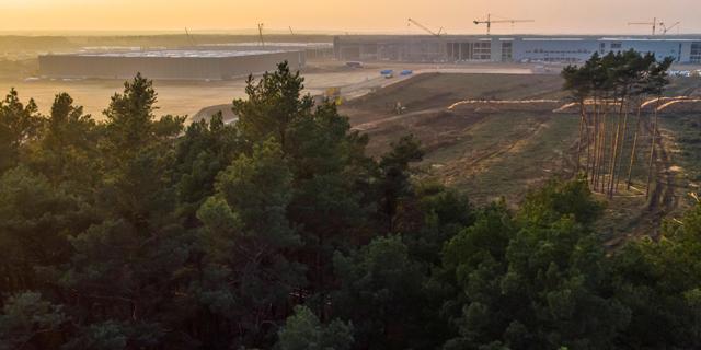 יער של נחשים מעכב את מפעל טסלה בגרמניה