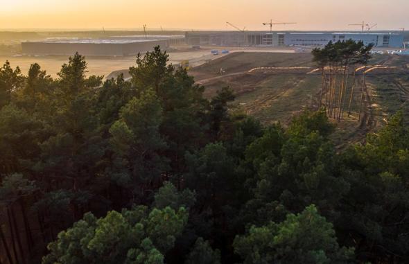 היער הסמוך למפעל של טסלה, צילום: רויטרס