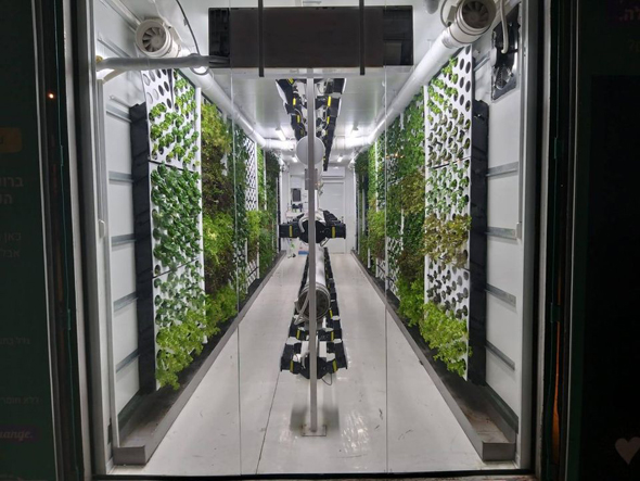 An inside look at the vertical farms. Photo: Vertical Field