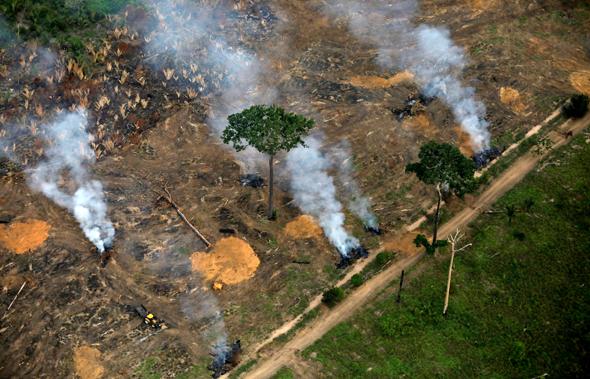 """בירוא יערות באמזונס. הרוב הולך לשטחי מרעה לבע""""ח"""