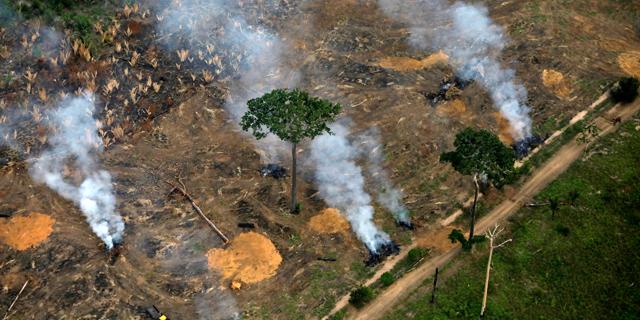היקף בירוא היערות זינק ב-2020 - ליותר מפי חמישה משטח מדינת ישראל