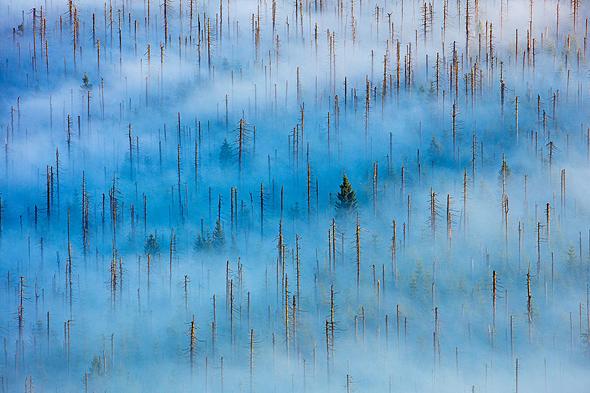 פוטו תחרות צילומי טבע 2020 מקום ראשון קטגוריית צומח, צילום: Radomir Jakubowski - NPOTY 202O