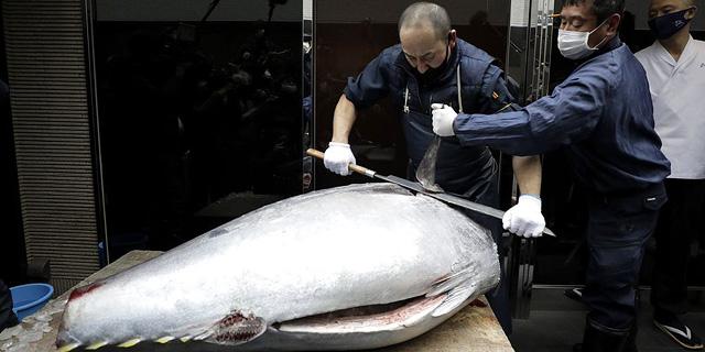 """בעשירית המחיר: דג טונה במשקל של כ-200 ק""""ג נמכר ביפן ב-202 אלף דולר"""