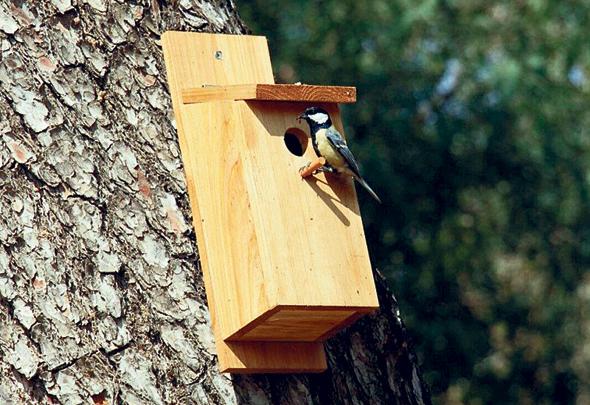 , צילום: birdsandgardens