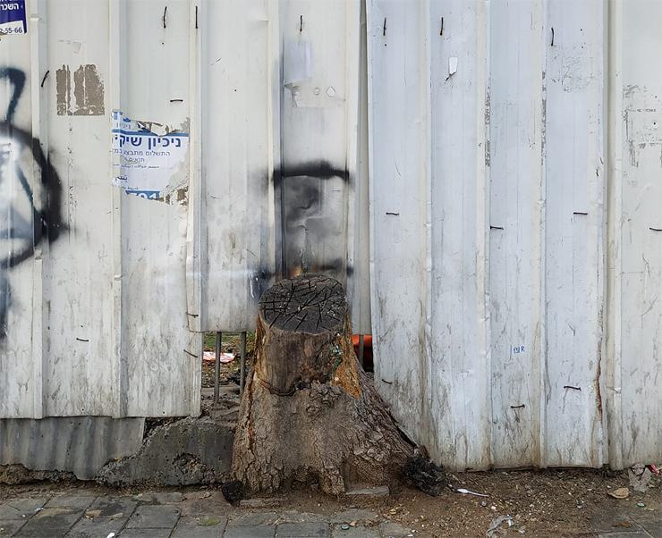 פיתוח הערים התעשייתיות שאנו חיים בהן בא על חשבון עשרות מיליוני עצים ברחבי העולם
