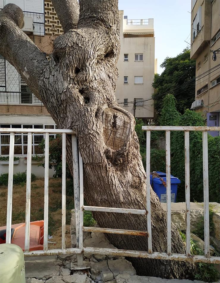 טבע עירוני בישראל