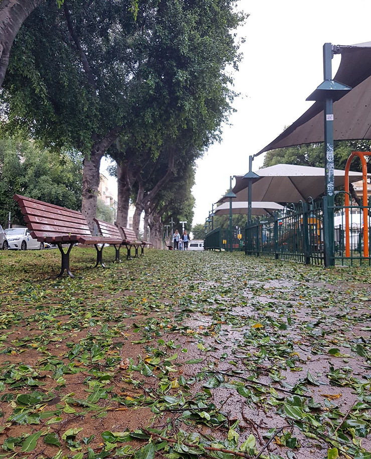 שדרות רוטשילד בתל אביב: מחקרים מוכיחים כי תושבים יעדיפו לצעוד, לרוץ ואו לבלות ברחובות עם עצים