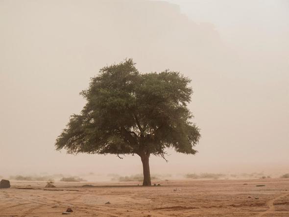חול סופה והעץ של לורנס של אייל סגל, צילום: אייל סגל