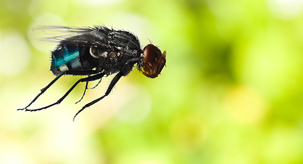 FlyingSpArk plans to create protein powder from fruit fly larvae. Photo: Shutterstock