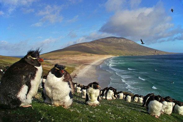 תראו כמה שהם חמודים, הפינגווינים האלה, צילום: Ben Tubby