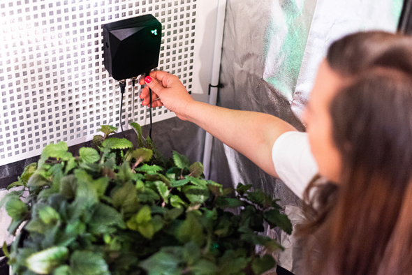 Growee's IoT solution makes urban farming smart and easy. Photo: Growee Technologies