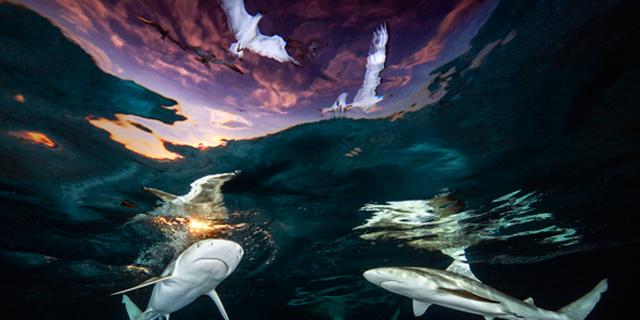 שקט, מצלמים: תמונות מדהימות מתחרות צילומים מתחת למים