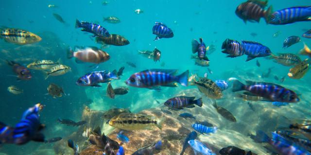 """דו""""ח: שליש מהמינים של דגי מים מתוקים בעולם בסכנת הכחדה"""