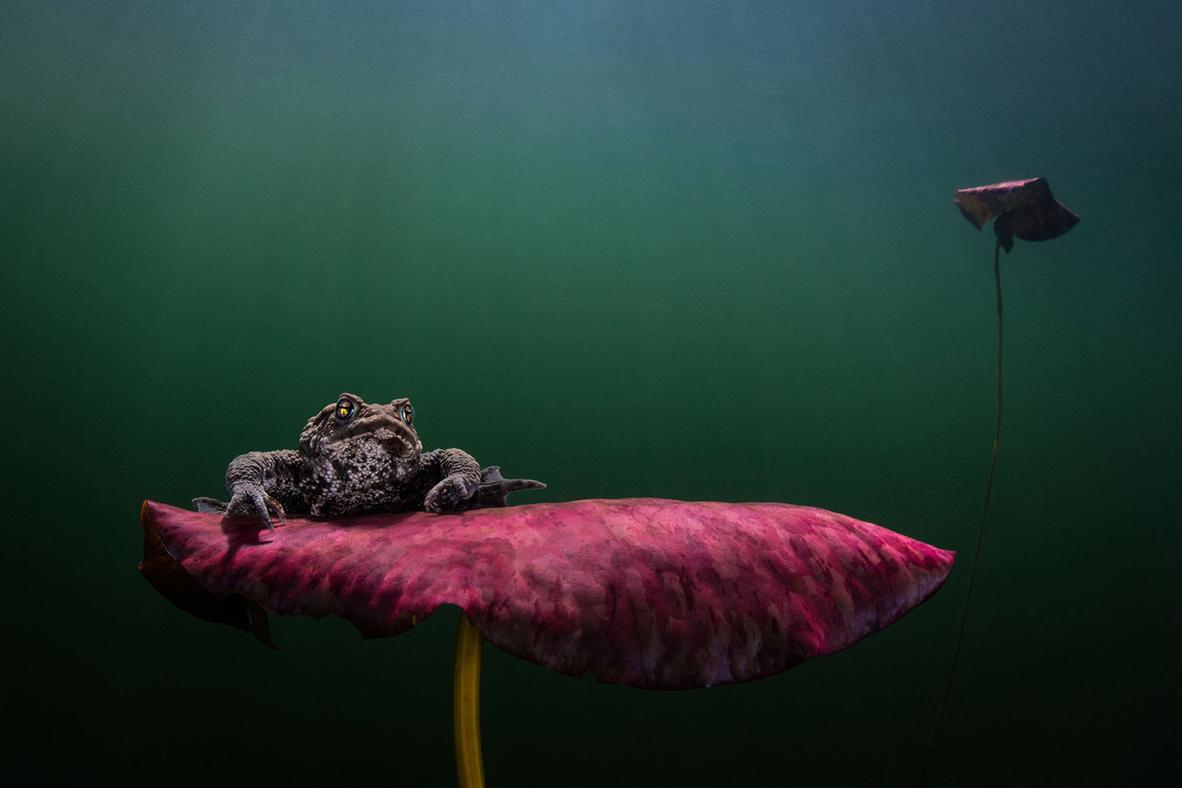 צילום: Johan Sundelin / Ocean Art