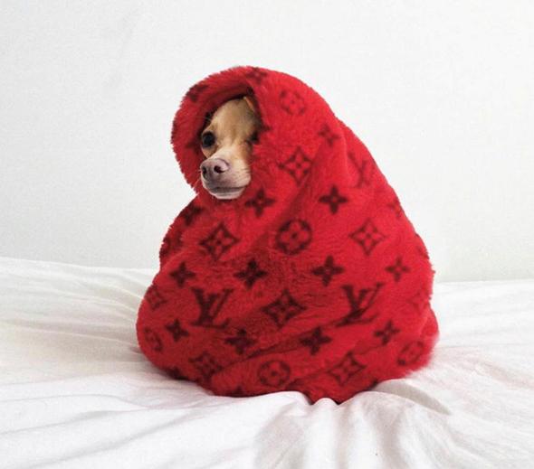 הכלבה בובי בילי. 274 אלף עוקבים באינסטגרם, צילום מתוך האינסטגרם של @ boobie_billie