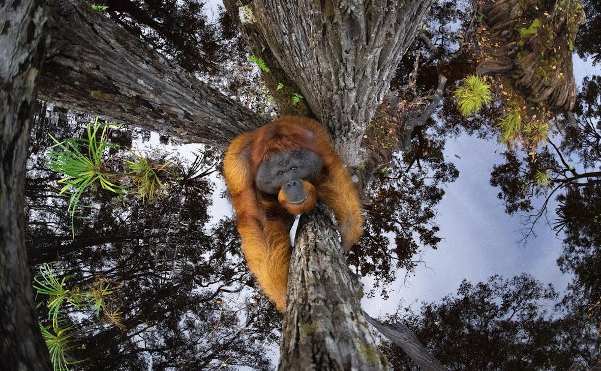 צילום: Thomas Vijayan / World Nature Photography Awards